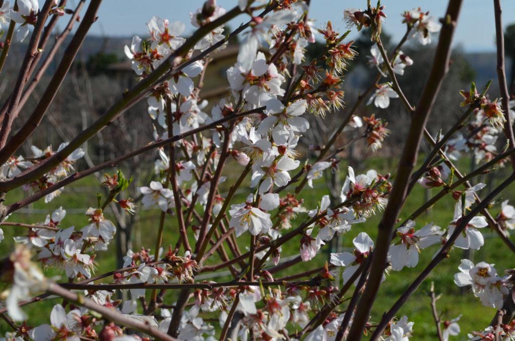 Primo piano di una pianta di ciliegio